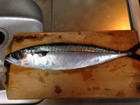 mackerel saba